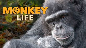 Netflix box art for Monkey Life - Season 7