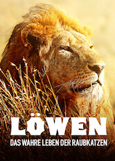 Search netflix Lions – The Private Life of Big Cats
